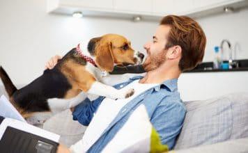 homme avec son chien
